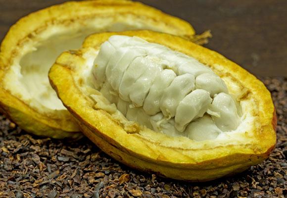 Cocoa pod opened