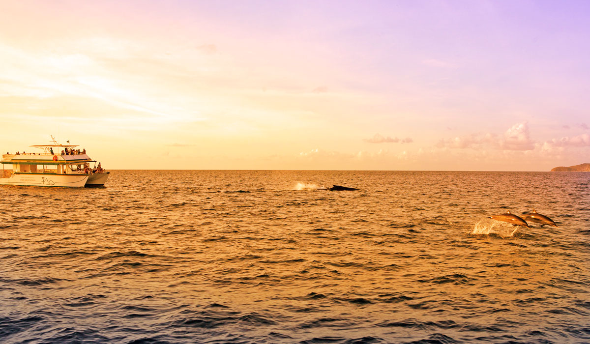 Dolphins spotted on Jazzy Sunset Cruise at Jade Mountain